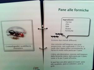 viaggi nel tempo possibili con le formiche